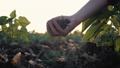 手 土地 土壌の動画 43534974
