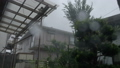 typhoon, windstorm, rain 43560919