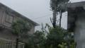 typhoon, windstorm, rain 43560920