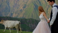 Cheerful newlyweds on a background of beautiful mountains, in the background a cow passes 43588901