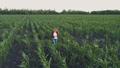 トウモロコシ コーン とうもろこしの動画 43615127