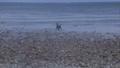 A dog playful near the seashore 43617476