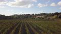 Beautiful drone shot of vineyard in Yarra Valley,  43629314