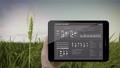 Analysis barley crop on barley field, IoT tablet 43677045