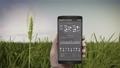 Analysis barley crop on barley field, IoT mobile 43677046