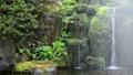 柿田川公園-6006670 43682506