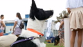 Black and white border collie running on the green grass performs tricks 43700912