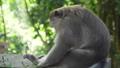 동물, 원숭이, 나무 43740824