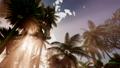 Sunset Beams through Palm Trees 43818212