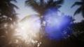 Sunset Beams through Palm Trees 43818217