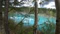 枯れた松の木が立つ幻想的な青い池の風景._7 43846566