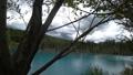 枯れた松の木が立つ幻想的な青い池の風景._2 43846577