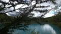 枯れた松の木が立つ幻想的な青い池の風景._1 43846579