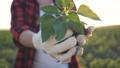 葉 ガーデニング 植物の動画 43853807