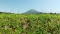 从Oyama Nozomu看到的无人机鸟瞰图春天Oyama和稻田上升 43889752