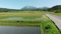 无人机鸟瞰稻田和小山春天上升 43889755