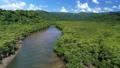 西表島のマングローブ 43937288