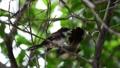 นก,นกเกาะ,กิ่งไม้ 43984027