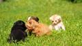animal cat dog 43996956