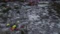 日本岐阜縣旅遊景點名稱Monaki Pond(莫奈池塘) 44025724