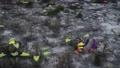 日本岐阜縣旅遊景點名稱Monaki Pond(莫奈池塘) 44025726