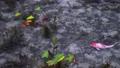 日本岐阜縣旅遊景點名稱Monaki Pond(莫奈池塘) 44025728