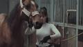 A rider stroking her horse 44056519
