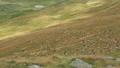 Flock of sheep walking on mountain pasture 44073479