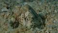 モンヒモウミヘビ 水中映像 水中動画 映像 動画 44145766