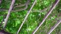 夏の木漏れ日イメージ パーゴラ 移動撮影 44159116