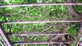 夏の木漏れ日イメージ パーゴラ 移動撮影 44159117