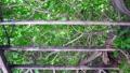 夏の木漏れ日イメージ パーゴラ 移動撮影 44159118