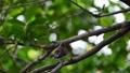 นก,กิ่งไม้,สัตว์ 44176675