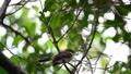 นก,กิ่งไม้,สัตว์ 44176676