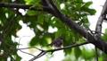 นก,กิ่งไม้,สัตว์ 44176677
