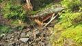Mountain steam flowing down in gorge. Carpathians 44236958