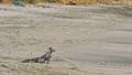 Small Yorkshire terrier on a sandy beach 44253682