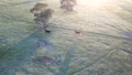 オーストラリア 広大な大地 朝日 大自然 44310311
