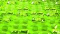 Many green glasses 44315458