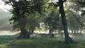 Beam Of Light, early morning, kayanodaira 44318732