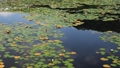 hitonuma, water lily, water-lily 44318737