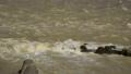 被出水淹沒的<相模川>相模川Up(修復射擊)神奈川縣相模原市 44373710