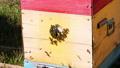 สัตว์,สัตว์ต่างๆ,รังผึ้ง 44392156