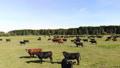 牧场 动物 奶牛 44392400