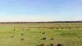 牧场 动物 奶牛 44392422