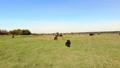 牧场 动物 奶牛 44392426