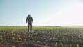 The senior farmer walks on the field and checks the corn harvest 44409134
