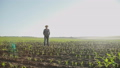 Portrait of the old farmer in hat with hands in pockets stands in the corn field 44409141