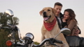 couple, motorcycle, dog 44435926