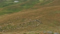 A flock of sheep walking on the grassland. Sheep 44459665
